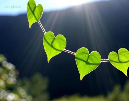 green-hearts-leaves-nature-Favim.com-162433